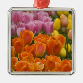 Netherlands aka Holland), Lisse. Keukenhof 4 Silver-Colored Square Decoration