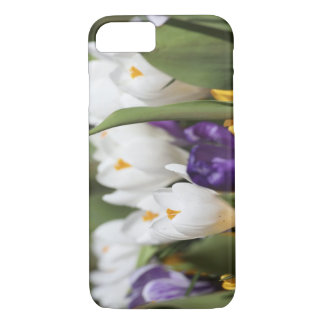 Netherlands, Keukenhoff Gardens, Tulips. iPhone 7 Case