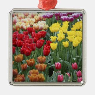 Netherlands, Keukenhoff Gardens, tulips. Silver-Colored Square Decoration
