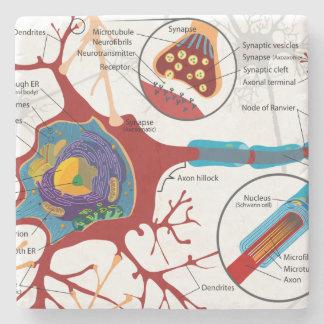 Neurons Nerve Style Stone Coaster