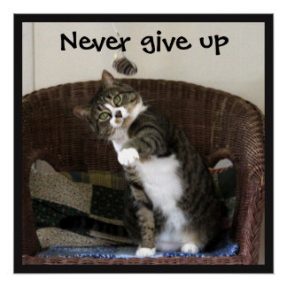 Never Give Up - Cat Chasing Mouse Poster