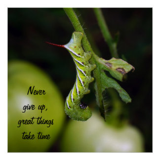 Never Give Up Caterpillar Poster