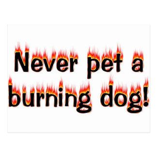 Never pet a burning dog! postcard