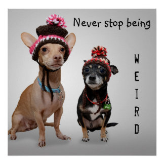 Never Stop Being Weird Cute Chihuahuas Poster