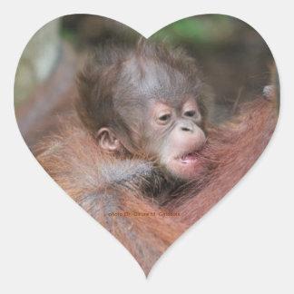 New Baby Orangutan Born Wild in Rainforest Sticker