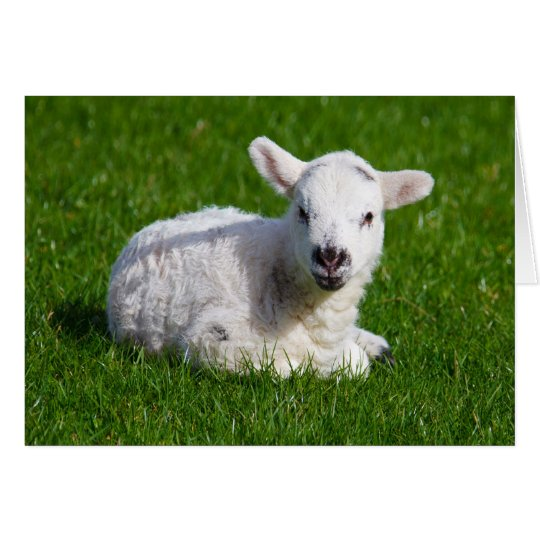 New born cute lamb on green grass card