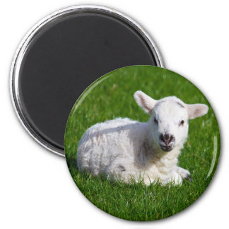 New born cute lamb on green grass 6 cm round magnet