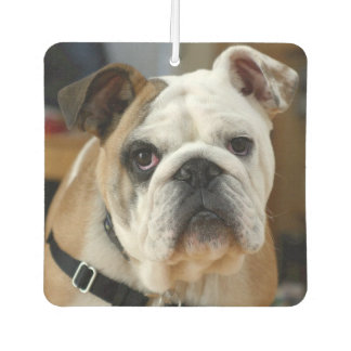 New Dog Smell, Funny Car Air Fresheners
