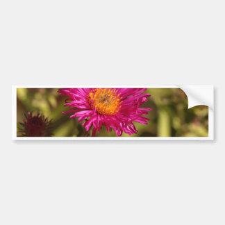New England aster (Symphyotrichum novae angliae) Bumper Sticker