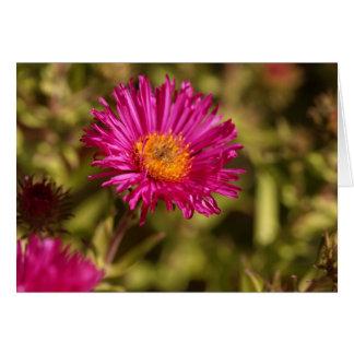 New England aster (Symphyotrichum novae angliae) Card