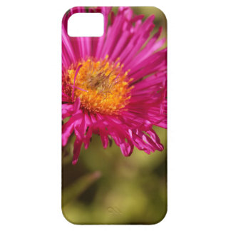 New England aster (Symphyotrichum novae angliae) iPhone 5 Cases