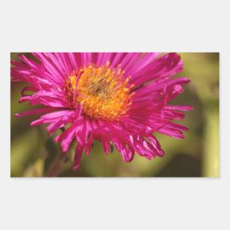 New England aster (Symphyotrichum novae angliae) Rectangular Sticker