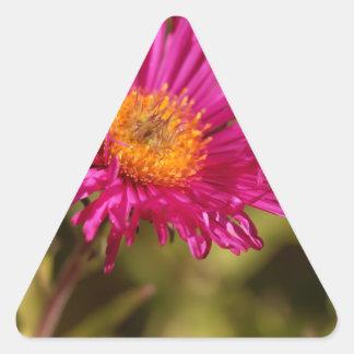 New England aster (Symphyotrichum novae angliae) Triangle Sticker