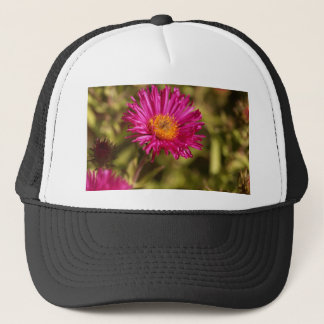 New England aster (Symphyotrichum novae angliae) Trucker Hat