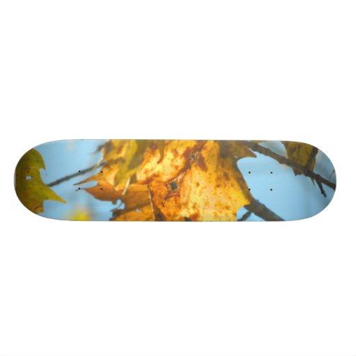 New England Fall Leaves in The Light Skateboard Decks