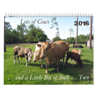**New For 2016 ** Lots of Cows & a Bit of Bull Too Calendar