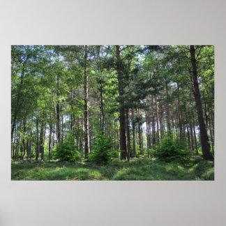 New Forest Landscape England Poster