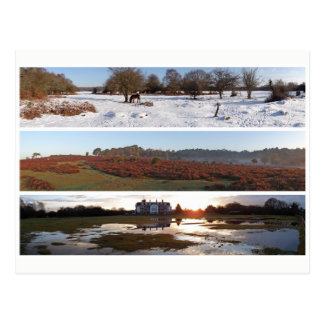 New Forest panoramas Postcard