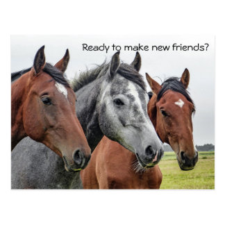 New Friends Horses Welcome From Teacher Postcard