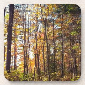 New Hampshire Autumn Forest Coaster