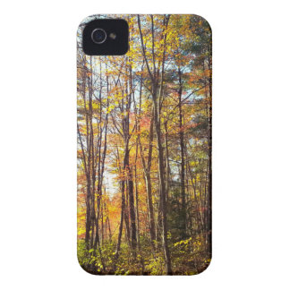 New Hampshire Autumn Forest iPhone 4 Case