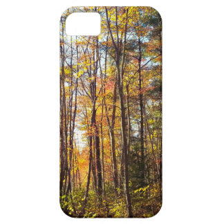New Hampshire Autumn Forest iPhone 5 Case