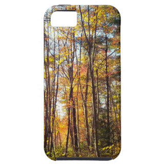 New Hampshire Autumn Forest iPhone 5 Cases