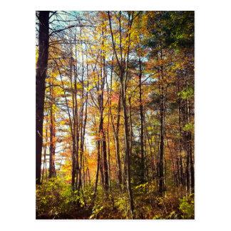 New Hampshire Autumn Forest Postcard