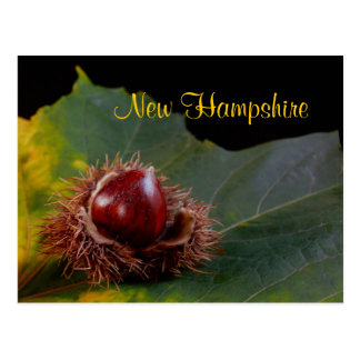 New Hampshire, Autumn Leaf With Nut Postcard