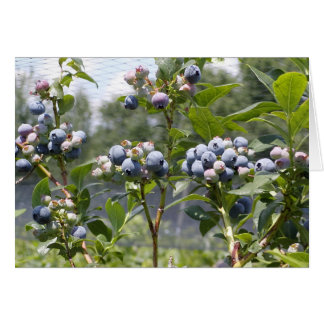 New Hampshire Blueberries Card