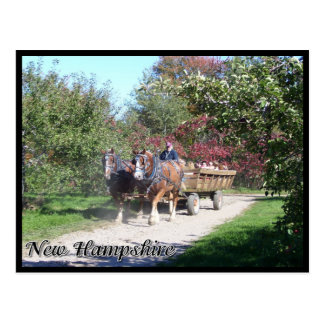 New Hampshire hayride Postcard