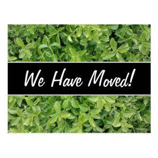 New House; Green Hedge Shrub Type Plant Photograph Postcard