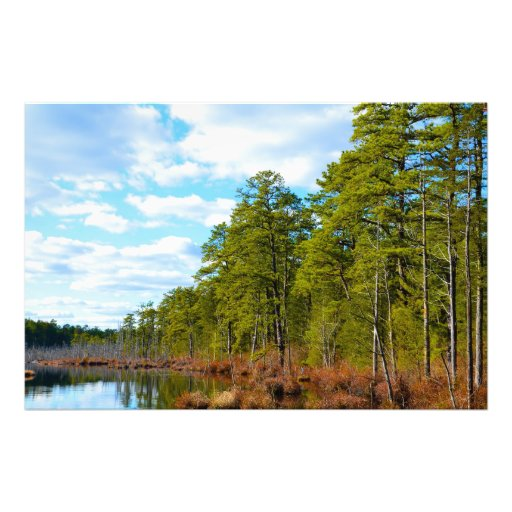 New Jersey Pinelands Photographic Print