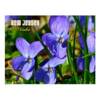 New Jersey State Flower: Violet Postcard