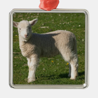 New Lamb, near Dunedin, South Island, New Silver-Colored Square Decoration