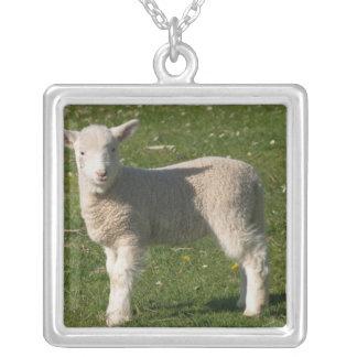 New Lamb, near Dunedin, South Island, New Square Pendant Necklace