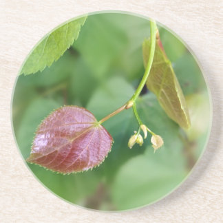 new leaf spring coaster