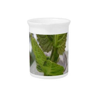 New life idea concept pitcher