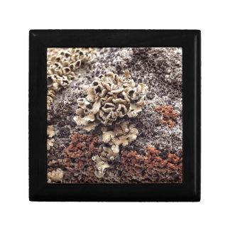 New Mexico Lichen Desert Rock Mossy Orange Small Square Gift Box