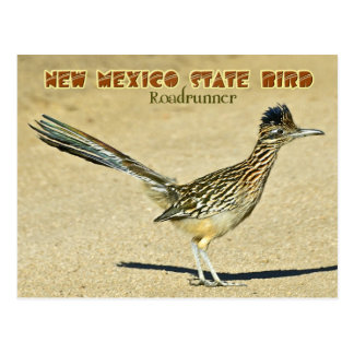 New Mexico State Bird: Roadrunner Postcard