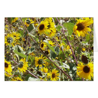New Mexico Sunflowers Thank You Card