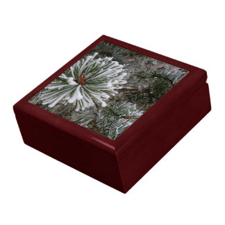 New Pine Cones Gift Box