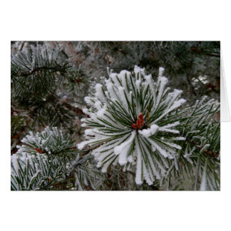 New Pine Cones Greeting Card