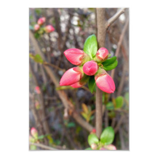 new red buds card
