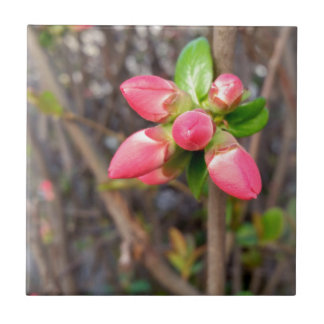 new red buds small square tile