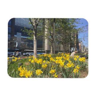 New York City Daffodils Columbus Circle NYC Spring Magnet