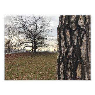 New York City NYC Sunrise Central Park Trees Photo