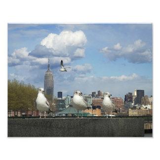 New York Skyline with Seagulls Photograph