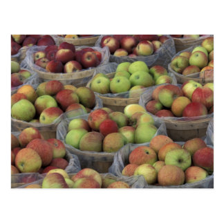 New York State Macintosh apples in baskets Postcard