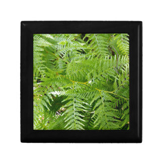 New Zealand Fern Small Square Gift Box